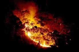 bushfire photos