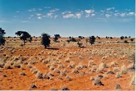 pictures of the kalahari desert