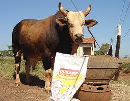 o touro bandido