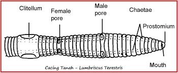 gambar telur cacing