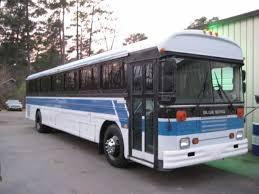bus bluebird