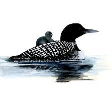 loon ducks