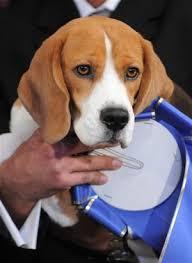 famous beagle