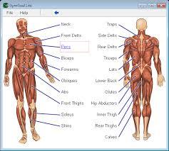 human body study