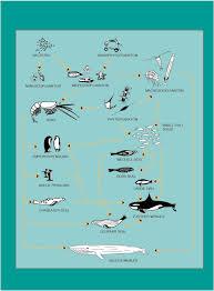 the antarctic food web