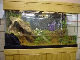 crayfish fish tank