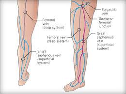 anatomy of lower limbs