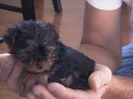 puppy designer