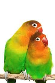 loves birds
