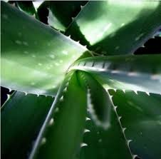 images of medicinal plants