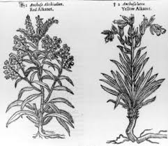 examples of herbs