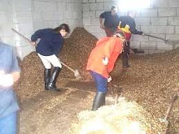mucking out horses
