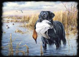 hunting dogs photos