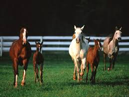 horses babies