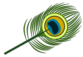 peacock graphics