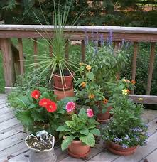 potted plants pictures