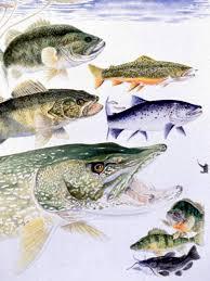 freshwater fish species
