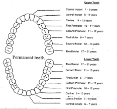 dental tooth charting