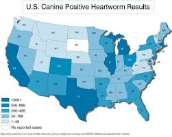 canine heartworms