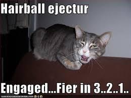 hairball cats