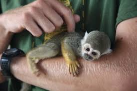 pictures of small monkeys