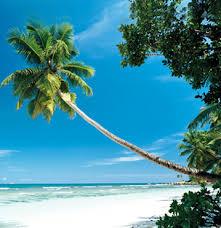 airline beach