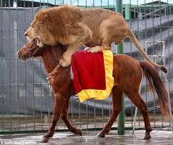 lion horse