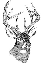 deer head picture