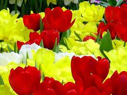 nurseries flower