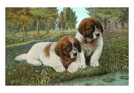 puppies st bernard