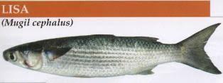 pescado lisa