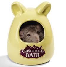 chinchilla bathing