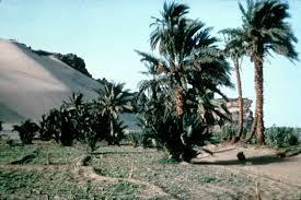 sudan vegetation