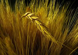 barley products
