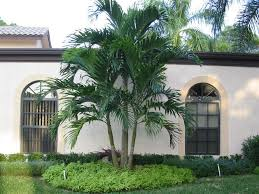 alexander palm trees