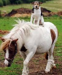baby shetland ponies
