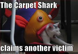 carpet shark pictures