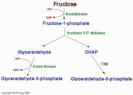 high fructose corn syrup structure