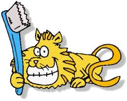 dental cat