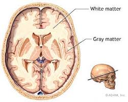 gray matter of brain