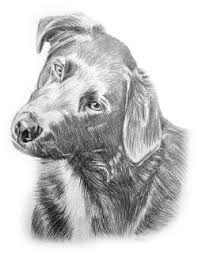 drawn pictures of dogs