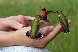 ornamental bird feeders