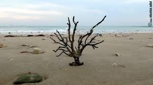 bois plage