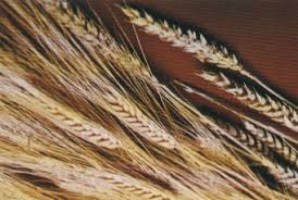 grains cereals