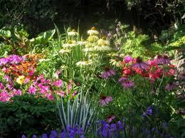 perennial flower gardening
