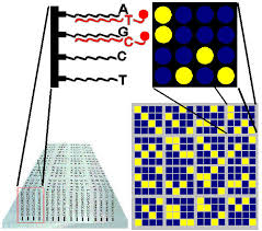 chip microarrays