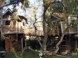 backyard tree forts