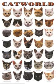 cat breed photos