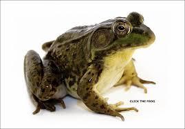 frog animals
