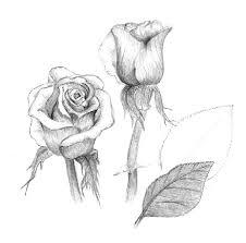 نقاشی بسیار زیبا از گل رز